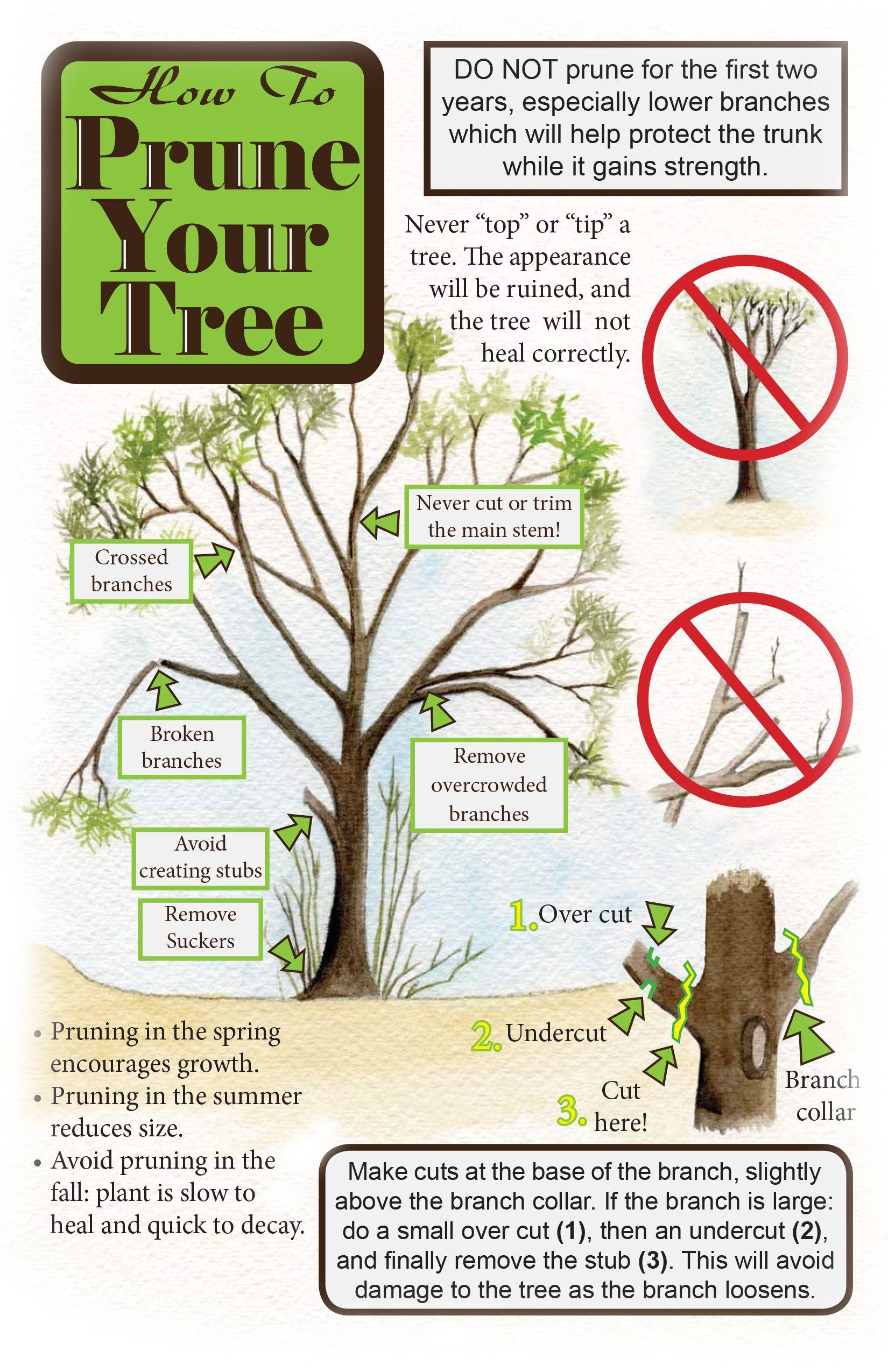 Planting & Maintenance | Tree care, Plants, Mesquite tree