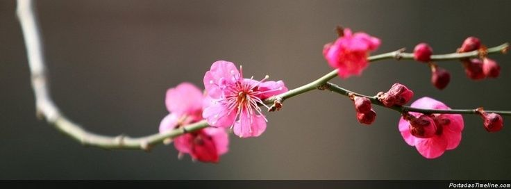 Flores Rosas Wallpaper For Facebook Cover Photos Cover Wallpaper