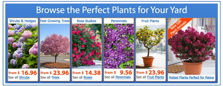 Plants Shrubs Online At Brighter Blooms Nursery Read Reviews