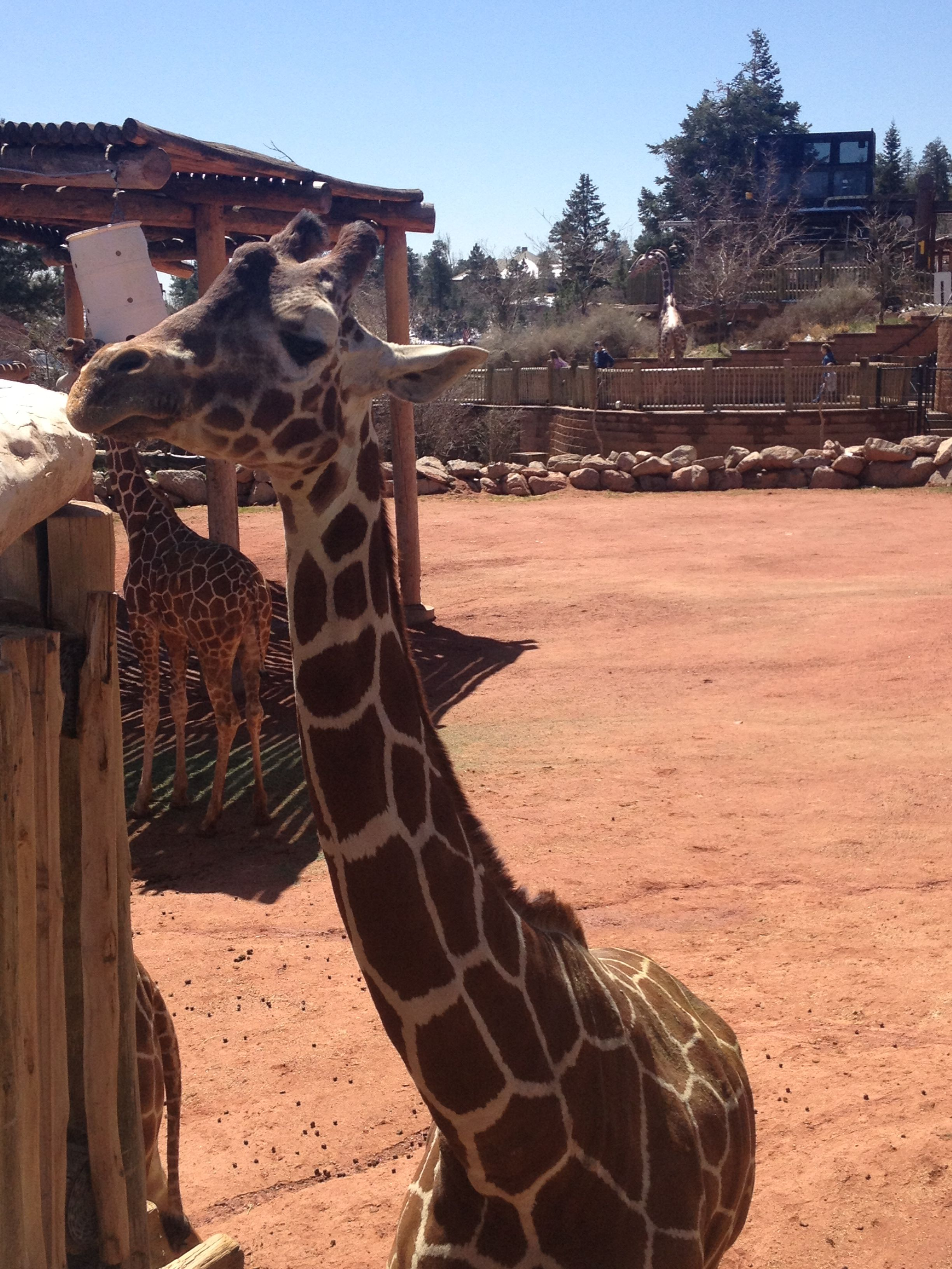 Cheyenne Mountain Zoo Pikes Peak Region Attractions Cheyenne Mountain Cheyenne Mountain Zoo Zoo