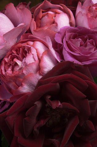 Lush And Velvety Katherine English Via Samira Shram Onto Gold Rose Saffron