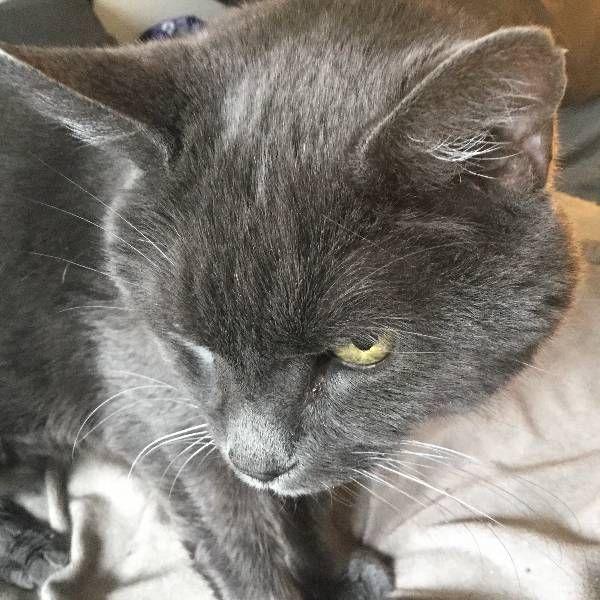 Lost Cat Domestic Short Hair In Glastonbury Ct Share Facebook