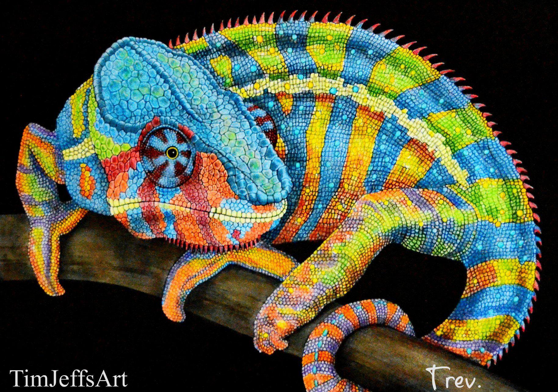 Panther Chameleon By Trevor Grant Timjeffs Timjeffsart