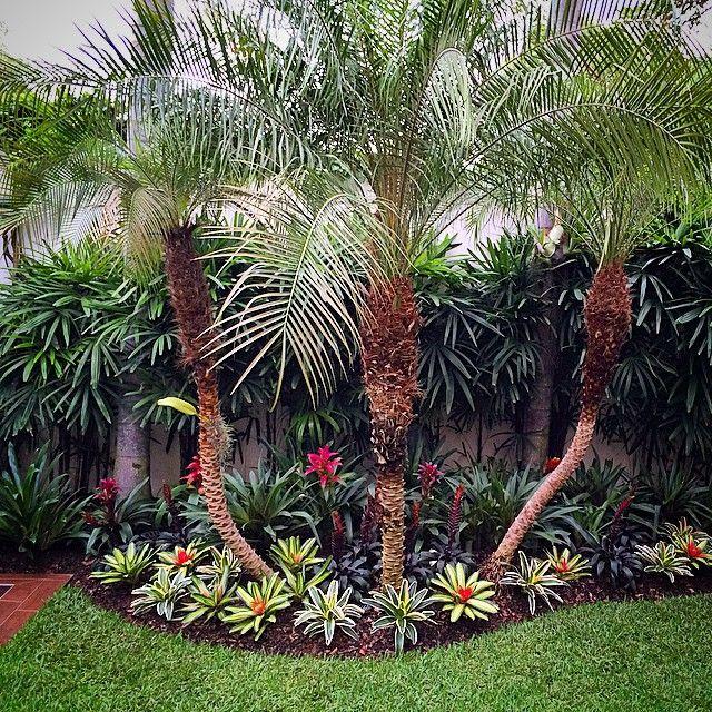 El jard n de hoy para cerrar la semana bromelias lindo - Paisajismo jardines exteriores ...