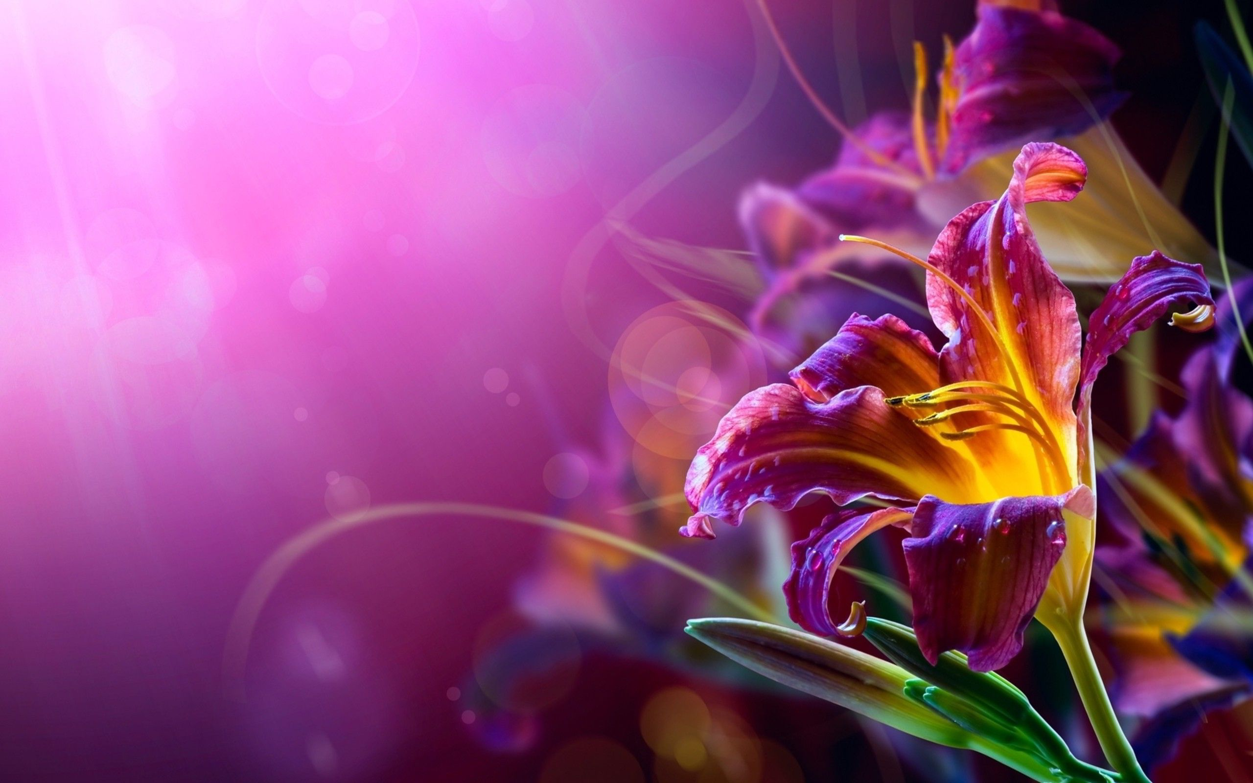 Beautiful Flowers HD  desktop wallpaper High Definition