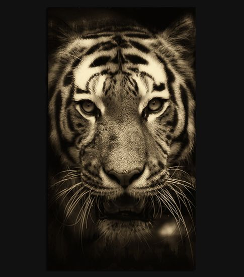 PC Tiger Wallpapers In Cool Collection 485x550 Mobile 16
