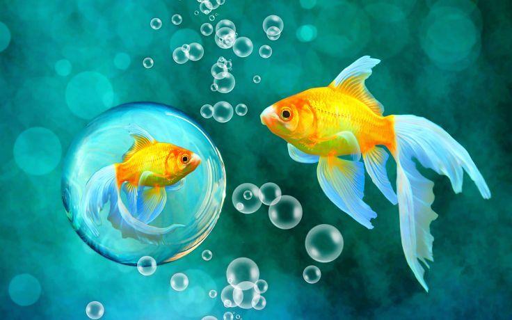 Bubbles Goldfish Blue Bokeh Sea Fish Fishes Underwater Water Gold Wallpaper 1920x1200 118856 Cross Paintings Fish Art Fish Wallpaper