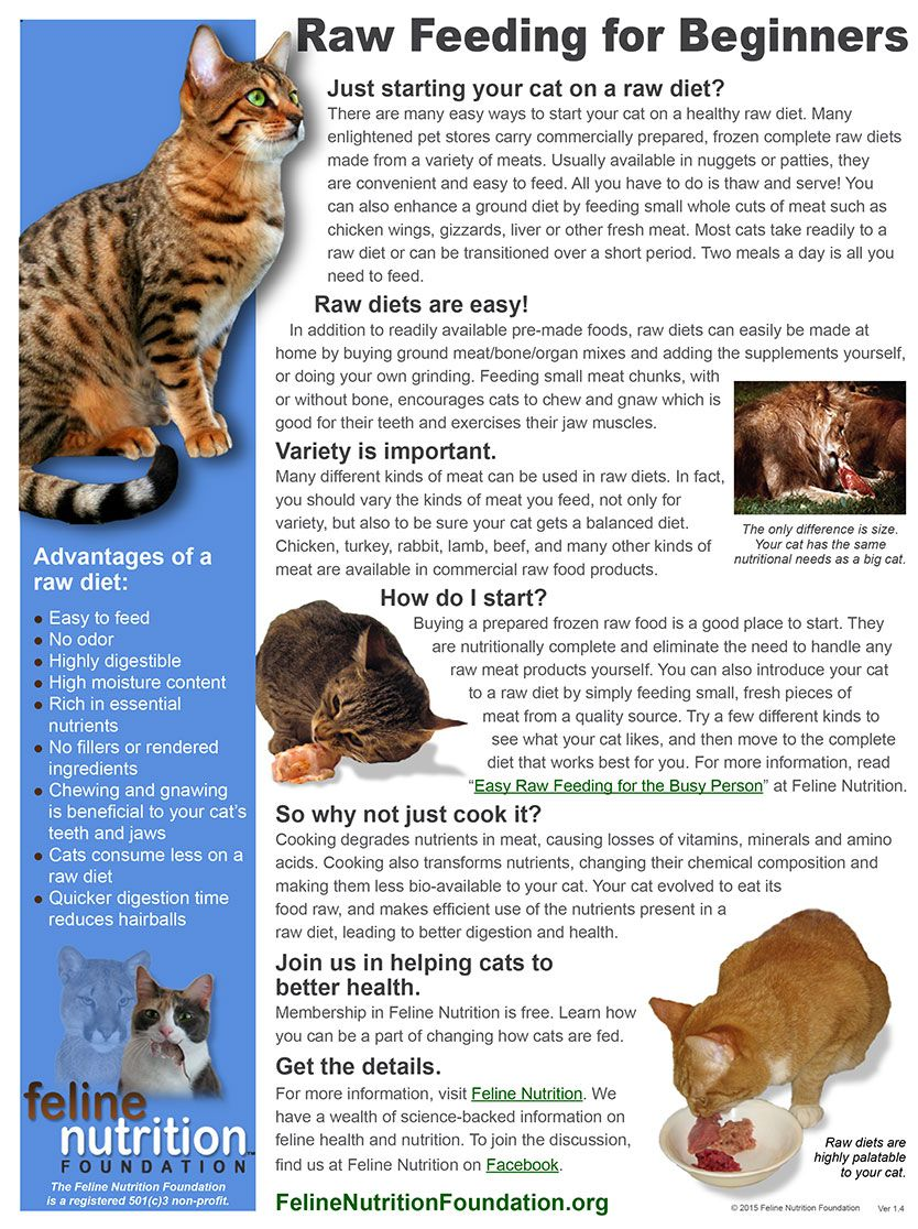 Feline Nutrition's One Page Guides Cat nutrition