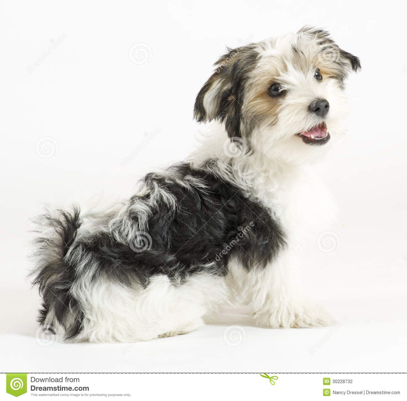 Long Haired Rat Terrier Mix Google Search Cute Dogs Rat