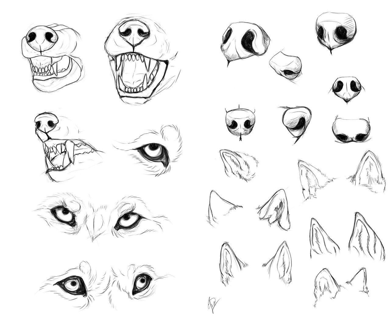 Hocicos Lobos En 2019 Pinterest Anatomia Dibujo Lobo Dibujo Y