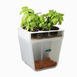 Indoor Gardening Kits Hiber Nation 13
