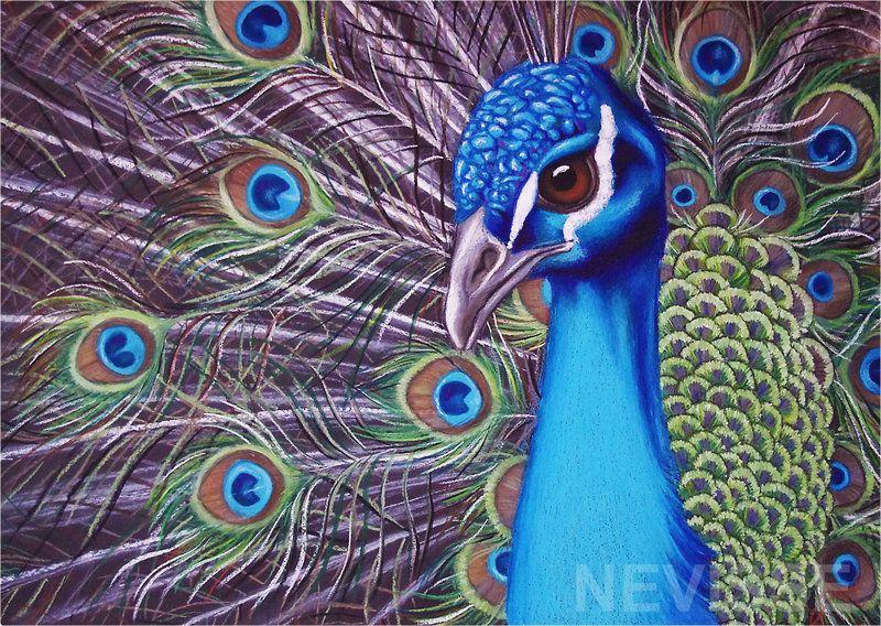 oil pastel art | Oil pastel peacock by ~Nevisse on deviantART ...