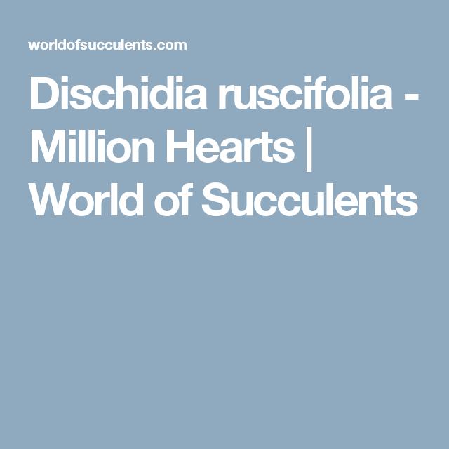 Dischidia ruscifolia - Million Hearts | World of Succulents