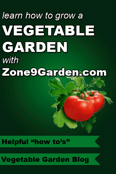 Learn how to grow a ve able garden with Zone9Garden Including a blog