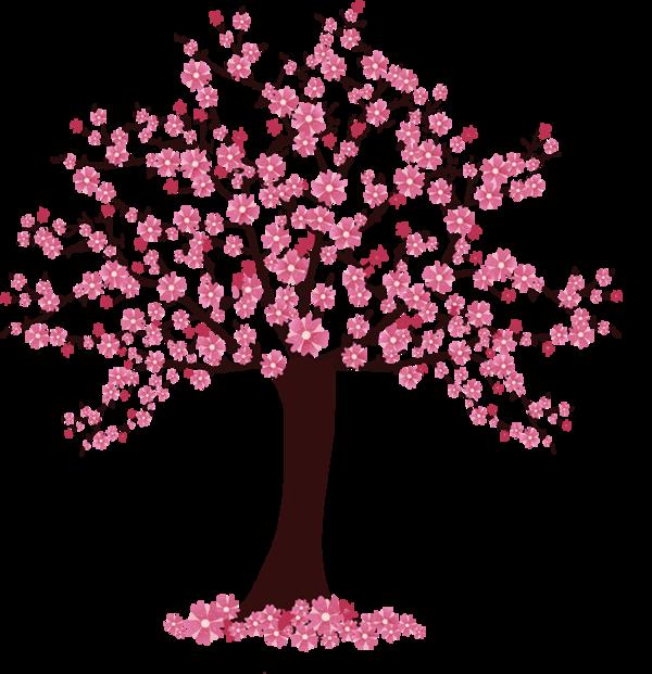 fleur de cerisier arbre cerisier