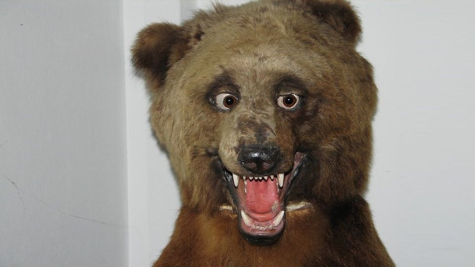 The Worlds Most Awkward Taxidermy