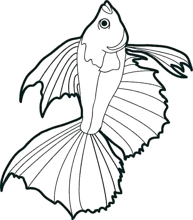 Coloring Page Fish X Ray Fish Coloring Page Bass Fish Coloring Pages