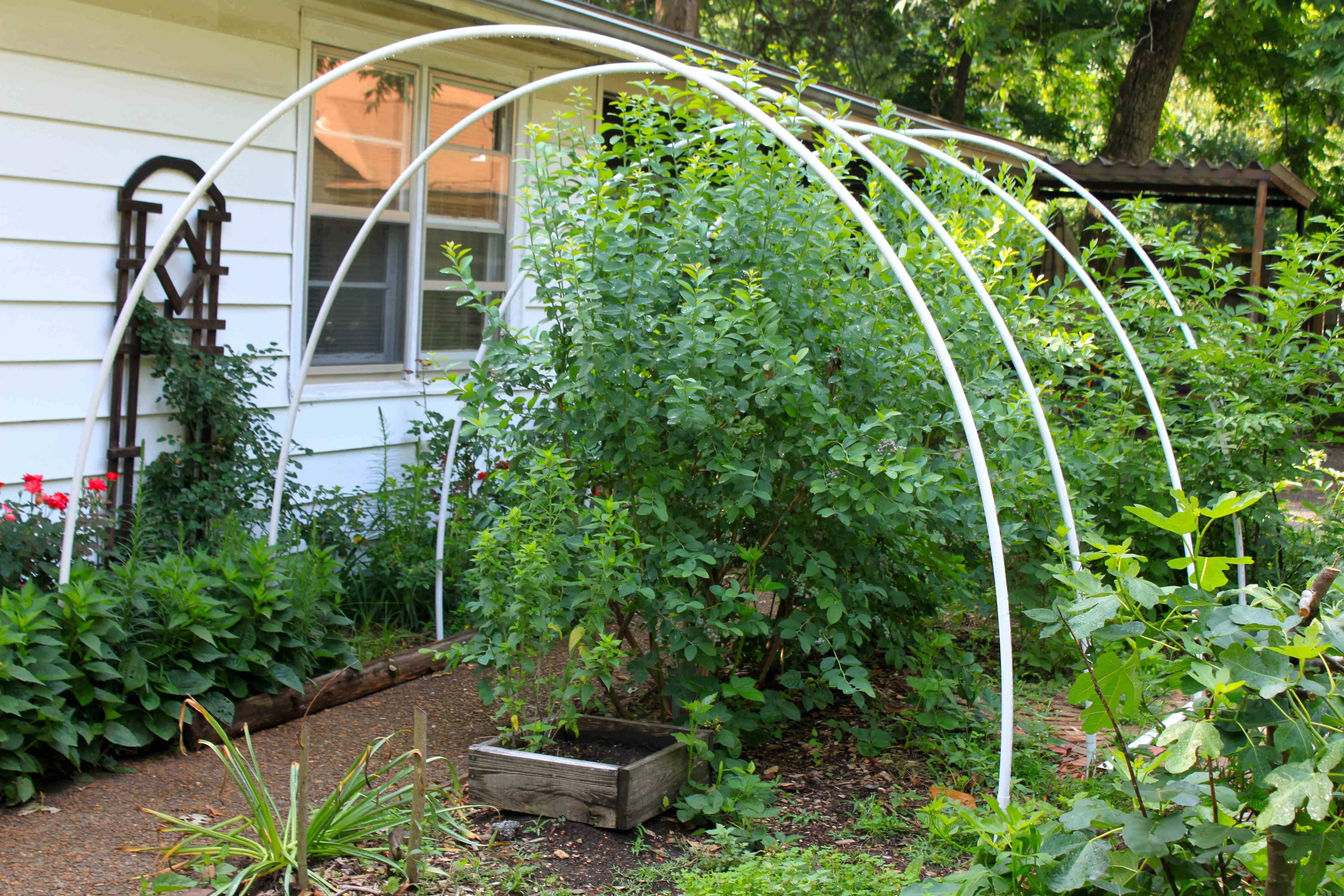 Many Years Ago I Tried D Deer Netting Over My Blueberry Bushes It Was A Complete Failure Didn T Secure The At Ground Level So Birds