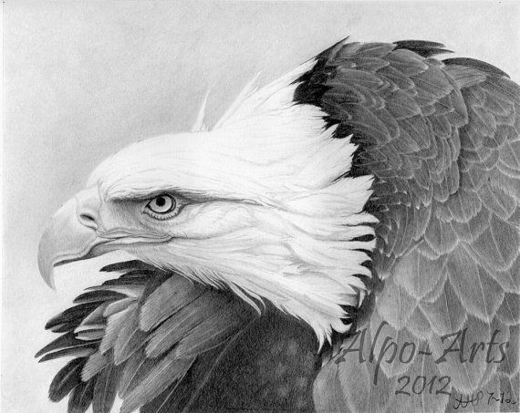 eagle pencil drawing 8x10 giclee print eagle pictures by ...