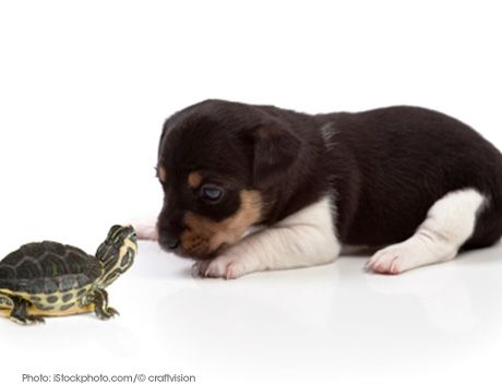 Turtle And Cute Puppy Puppies