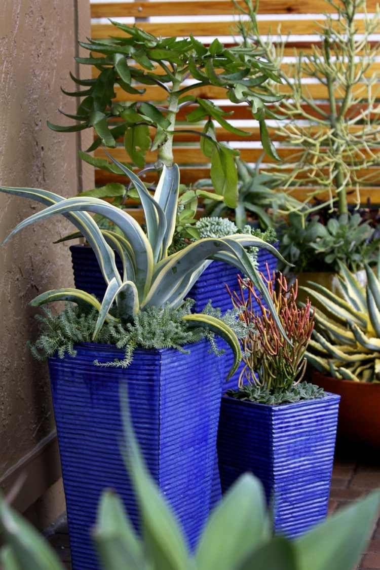 plantes succulentes dans pots fleur en bleu pour dcorer le jardin - Grand Pot Pour Jardin