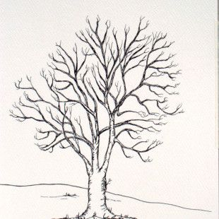 tree drawings clipartsco