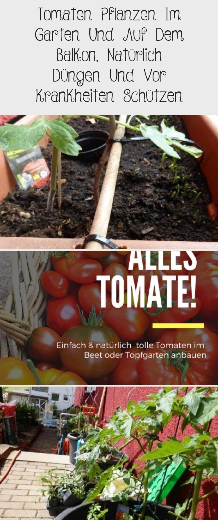 Tomaten Pflanzen Im Garten Und Auf Dem Balkon Naturlich Dungen Und Vor Krankheiten Schutzen Tomatenpflanzen Tomaten Pflanzen Aber Ri In 2020 Plants Tango Vegetables