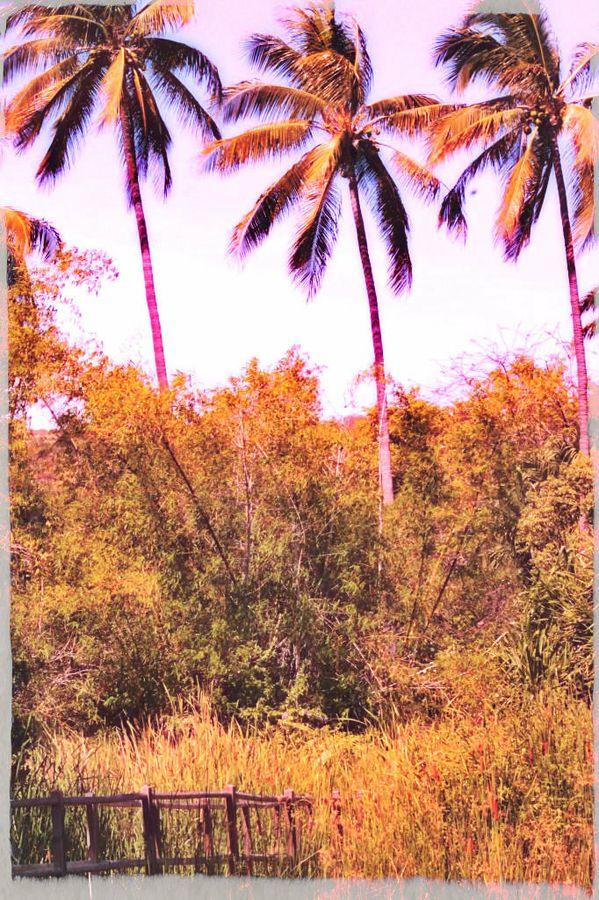 Le Jardin D Eden Sur L Ile De La Reunion Nature Fleurs Pinterest