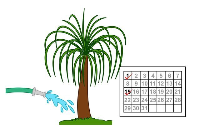 """The dracaena Anita is also known as the Anita cane or simply as the Anita plant. It is a cultivar of the reflexed dracaena or pleomele (Dracaena refkexa """"Anita""""). As a group, dracaenas are a rugged group of tropical plants that tolerate most growing conditions, and Anita is no different.  It is a hardy plant that rarely suffers from..."""