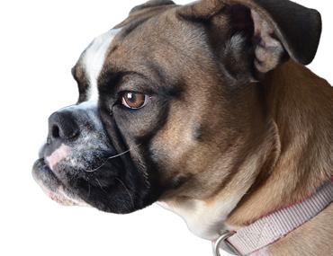 Pin on Dog Health Treatments
