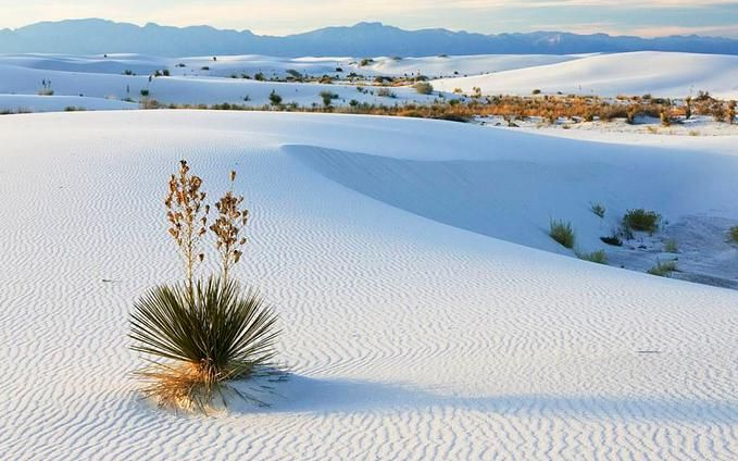 White sands... New Mexico_3