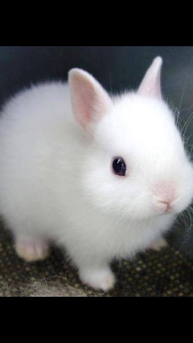 CUTE ALBINO RABBITS - YouTube |Awesome Baby White Bunnies