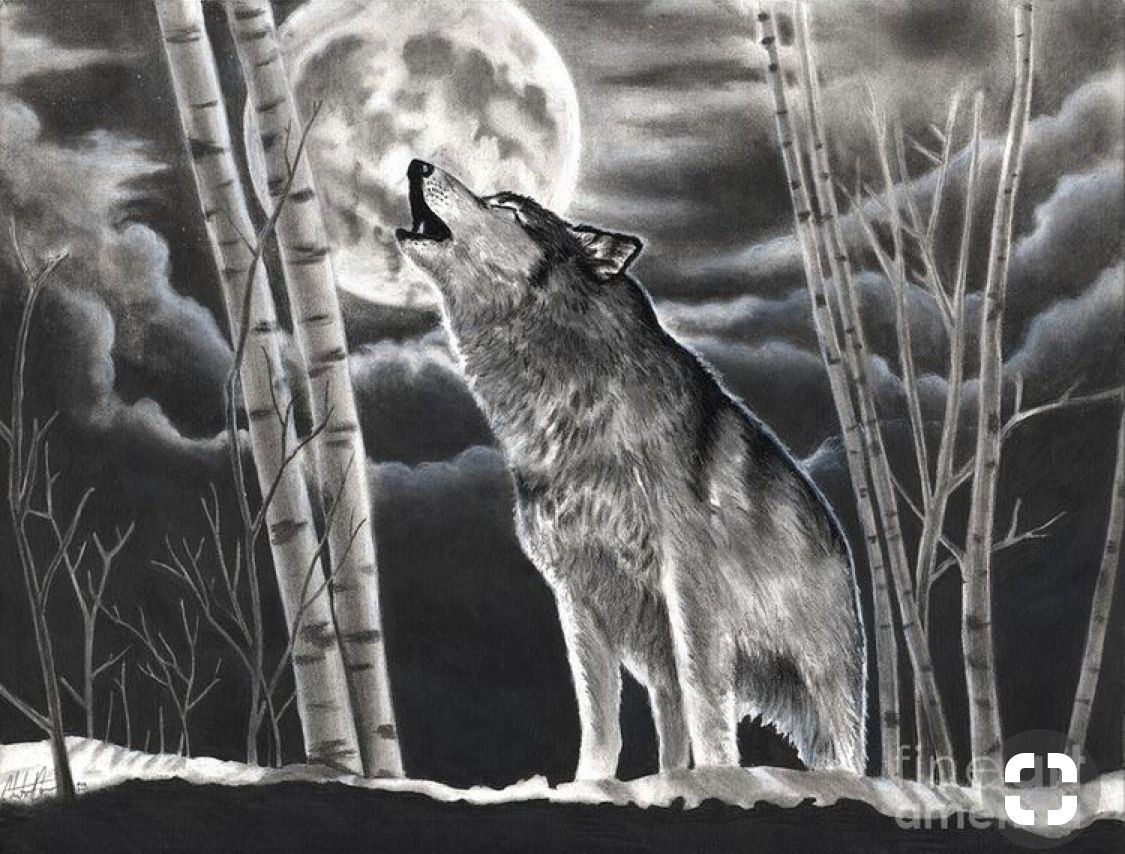 A Edward Cullen Twilight Love Story Wolf Howling At Moon Moon Drawing Wolf Howling