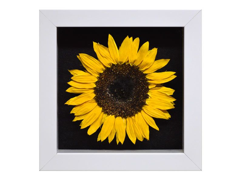 A Single Preserved Sunflower In A Mini Pave Shadow Box View Our Gallery For More Ideas On How To Preserve Flower Shadow Box How To Preserve Flowers Shadow Box