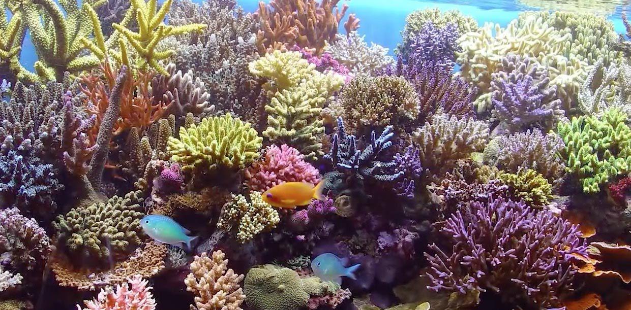 Coral Reef Aquarium For Beginners Coral Reef Aquarium 640 x 480