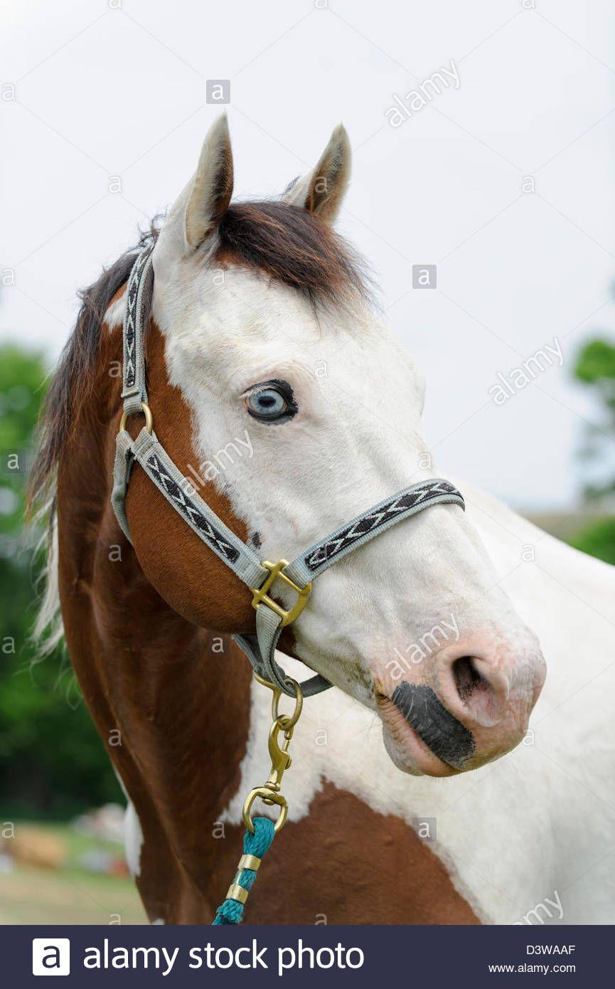 Flauschiges Pferd Stockfotos und bilder Kaufen Alamy