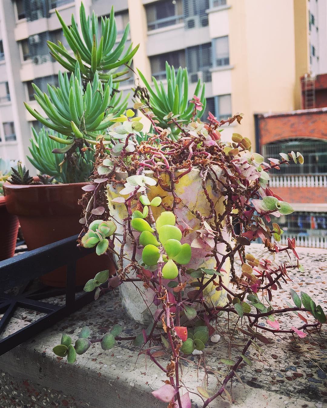 26 Best Succulent Garden Ideas Around The