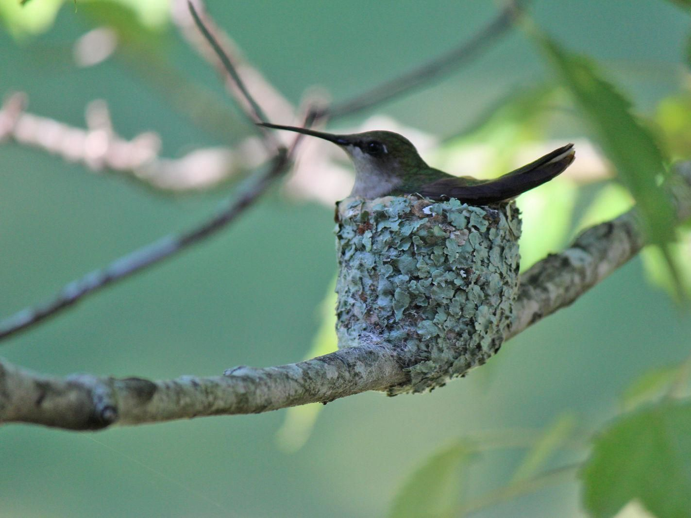 780ab3e0b8c249f3bb9f480b79f0bcf5 - How To Get A Hummingbird To Land On Your Finger