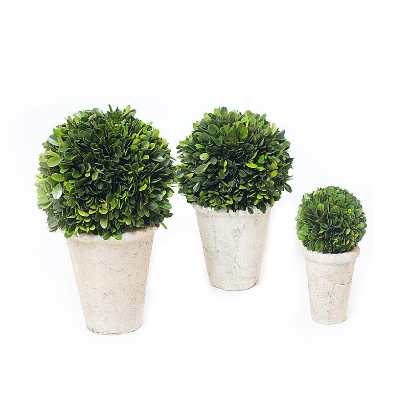 Preserved Boxwood Balls Potted Set Of 3 Pieces Preserved Boxwood Boxwood Balls Pot Sets