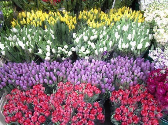 flower-market-maggio