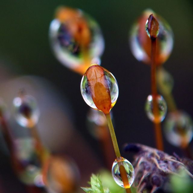 Dew - Earth's Liquid Jewelry. What causes it and why is it so damn pretty?