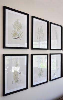 Free printable vintage fern study prints