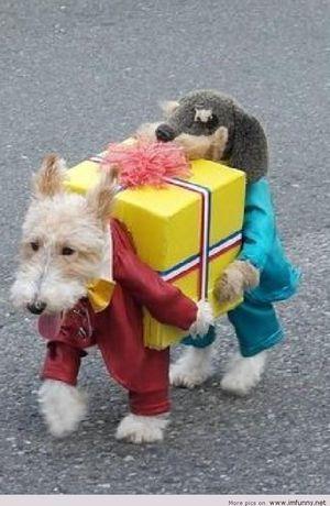 ハロウィン仮装の犬猫おもしろ画像!やらされてる感がハンパなくかわいいw , NAVER まとめ
