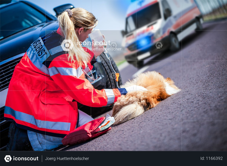 German Animal Medic Treats An Injured Dog Photo Dog