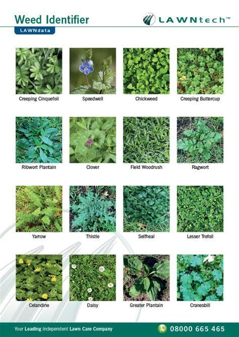 Image result for weed identification chart also weeds to know rh pinterest