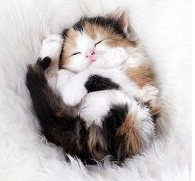 Cute Cats Being Cute Like They Are Everyday 56 Photos #cat #cats #cats_of_world #amour