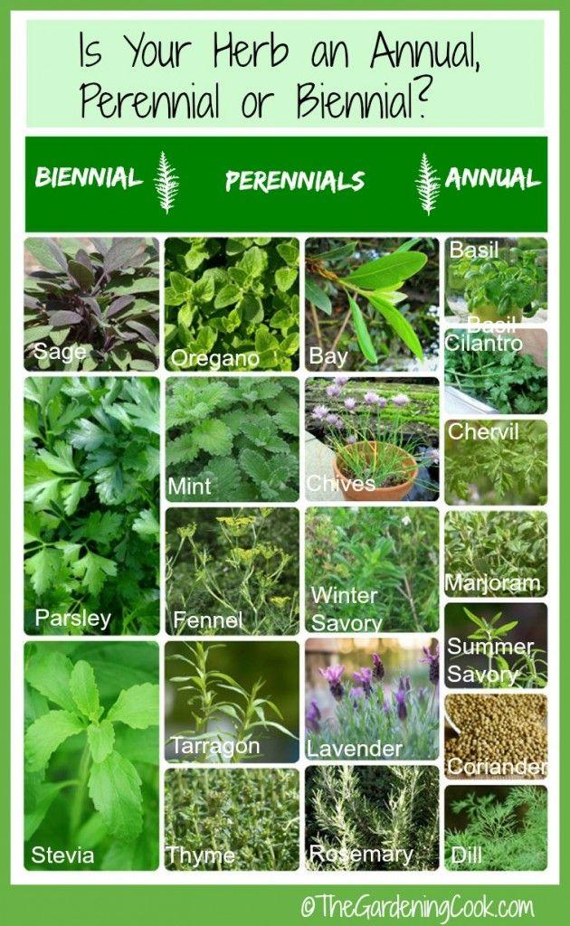Fresh Herbs Annual Biennial Or Perennial Fresh Herbs