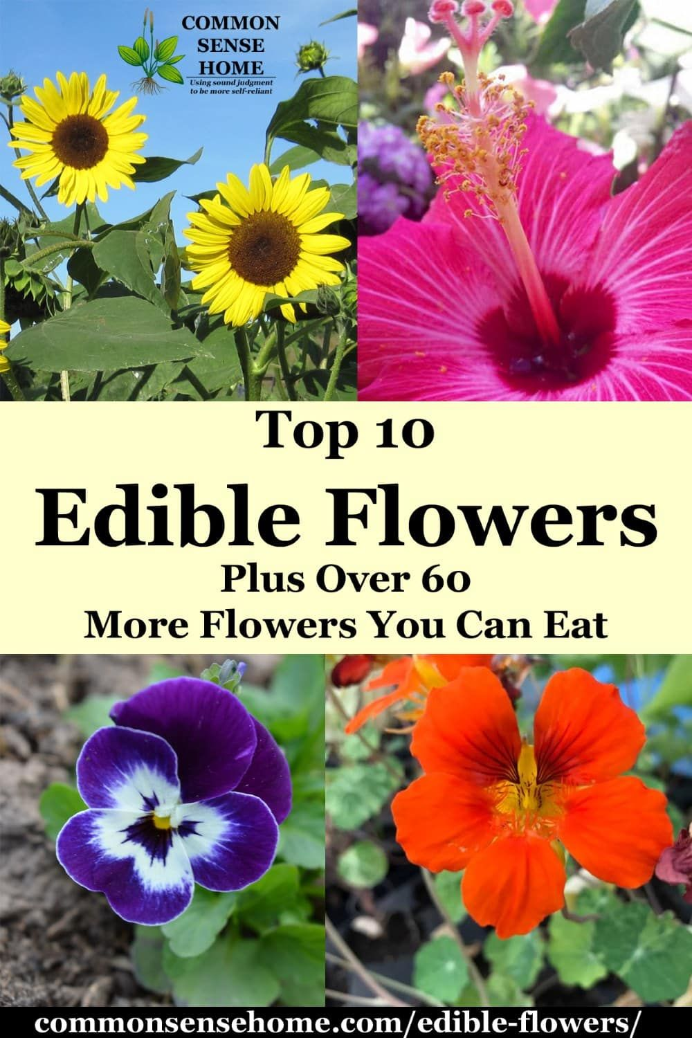 Edible Flowers List With Edible Flower Names And Pictures Edible Flowers Edible Flower Garden List Of Edible Flowers