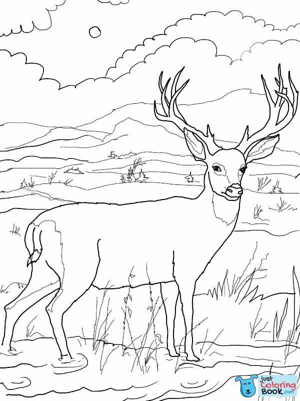 Mule Deer Coloring Pages Free Download Deer Coloring Pages Baby Coloring Pages Coloring Pages