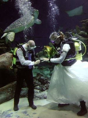 i've seen dogs make appearances at weddings before but never an albino sea turtle!